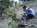 3-planting-5